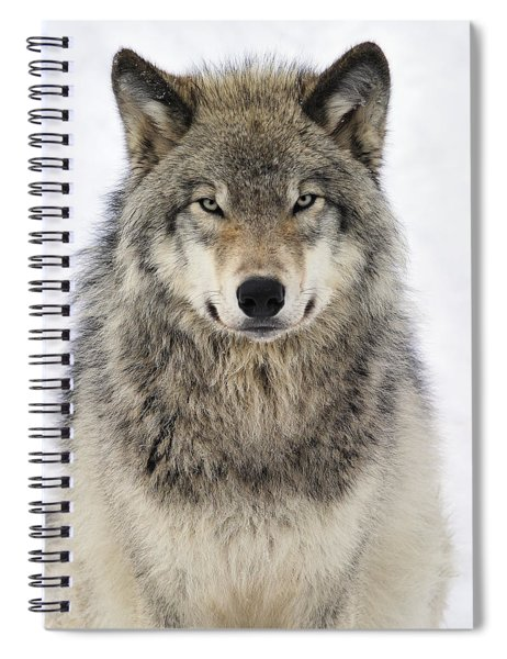 Timber Wolf Portrait Spiral Notebook