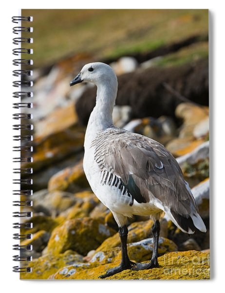 Upland Goose Spiral Notebook