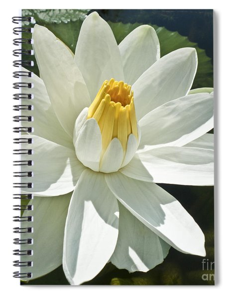White Water Lily - Nymphaea Spiral Notebook