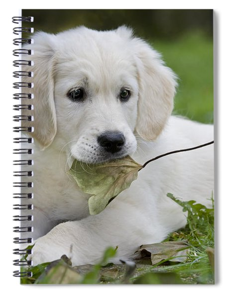 101130p064 Spiral Notebook