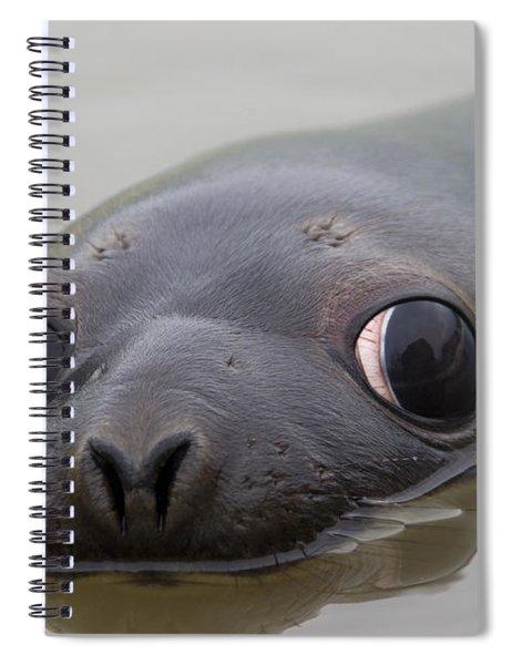 110714p127 Spiral Notebook