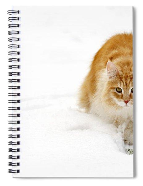 111230p310 Spiral Notebook