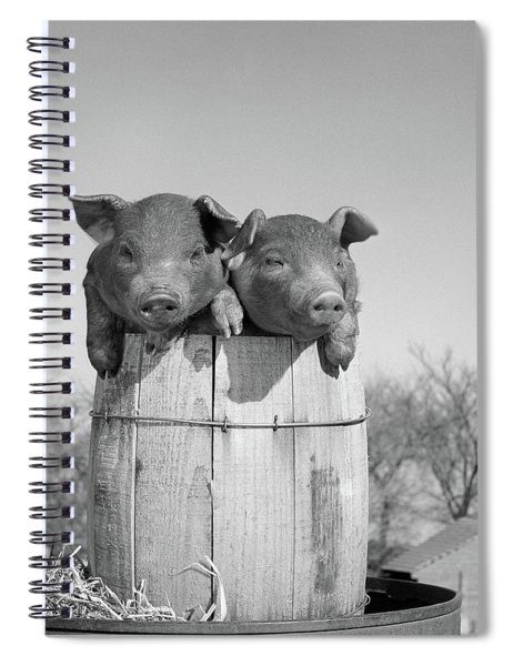 1950s Two Duroc Pigs Piglets In A Nail Spiral Notebook