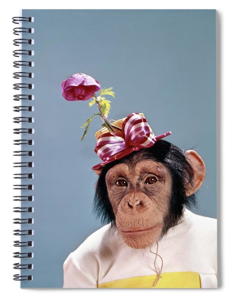 1960s Chimpanzee Wearing Dress Spiral Notebook