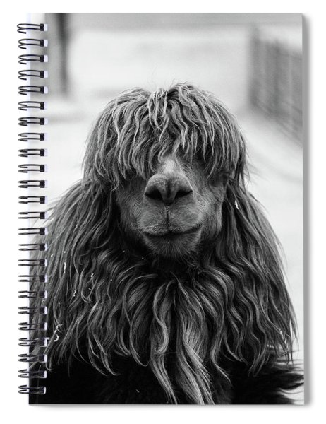 1960s Close-up Of Alpaca Vicugna Pacos Spiral Notebook by Vintage Images