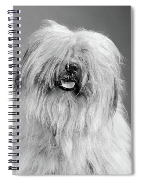 1960s Portrait Of Old English Sheepdog Spiral Notebook