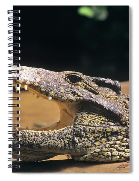1990s Close-up Profile Of Cuban Spiral Notebook