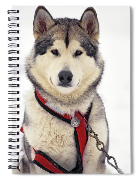 1990s Malamute Canis Lupus Familiaris Spiral Notebook