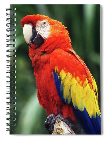 1990s Scarlet Macaw Ara Macao Looking Spiral Notebook