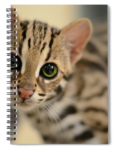 Asian Leopard Cub Spiral Notebook