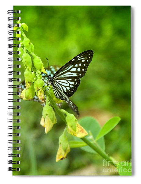 Blue Butterflies In The Green Garden Spiral Notebook