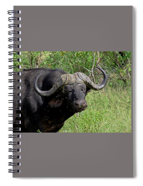 Cape Buffalo Spiral Notebook