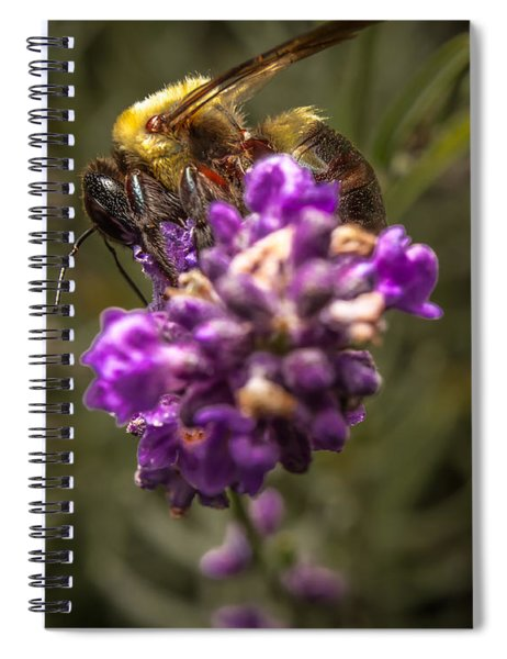 Carpenter Bee On A Lavender Spike Spiral Notebook