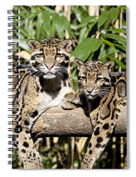 Spiral Notebook featuring the photograph Clouded Leopards by Brian Jannsen