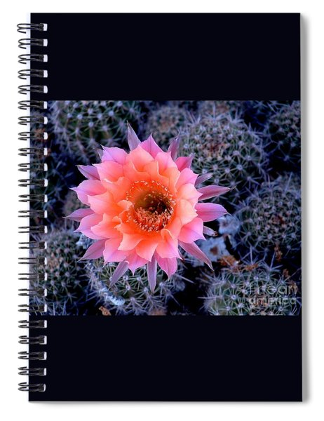 Desert Beauty Spiral Notebook