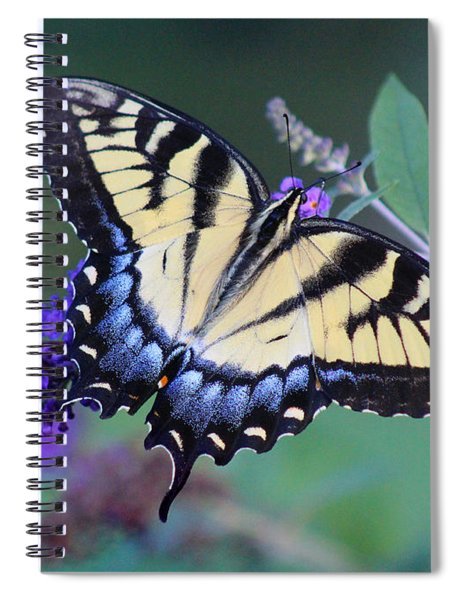 Eastern Tiger Swallowtail Butterfly On Butterfly Bush Spiral Notebook