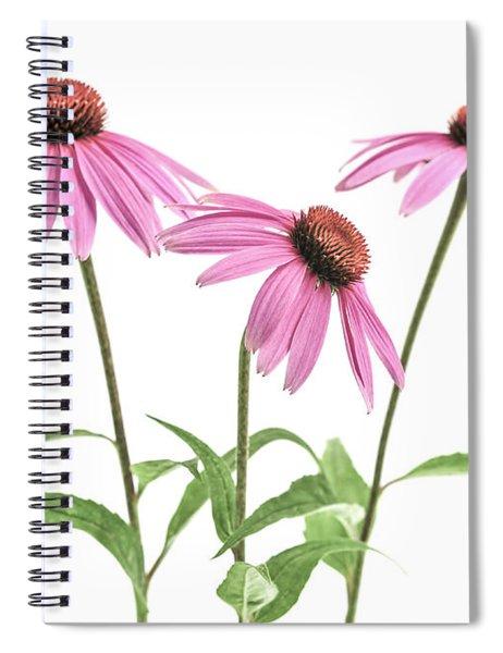 Echinacea Purpurea Flowers Spiral Notebook