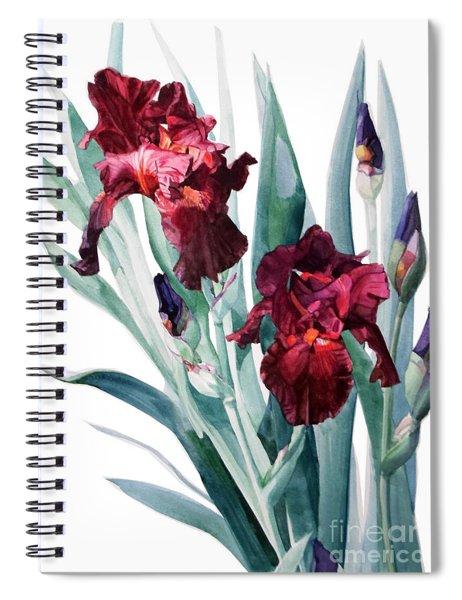 Dark Red Tall Bearded Iris Donatello Spiral Notebook