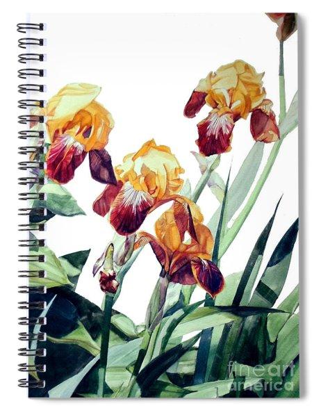 Watercolor Of Tall Bearded Irises I Call Iris La Vergine Degli Angeli Verdi Spiral Notebook
