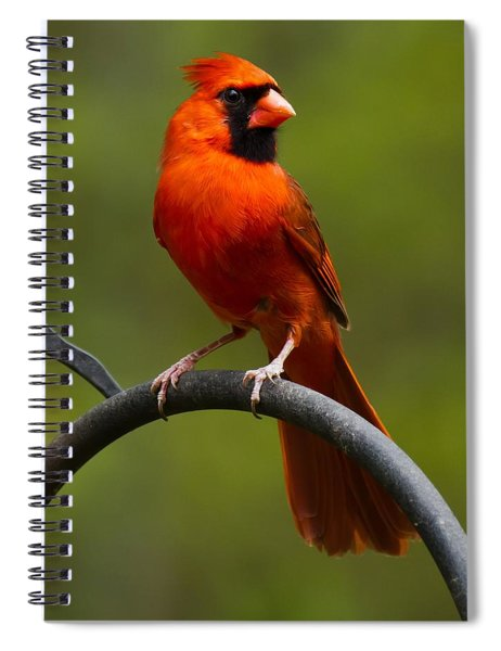 Spiral Notebook featuring the photograph Male Cardinal by Robert L Jackson