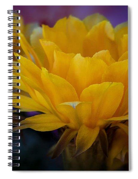 Orange Cactus Flowers  Spiral Notebook