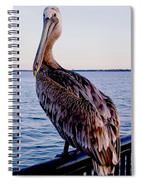 Pelican At Port Spiral Notebook