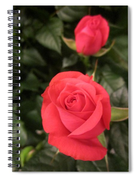 Roses In Red Spiral Notebook