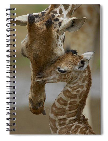 Rothschild Giraffe And Calf Spiral Notebook