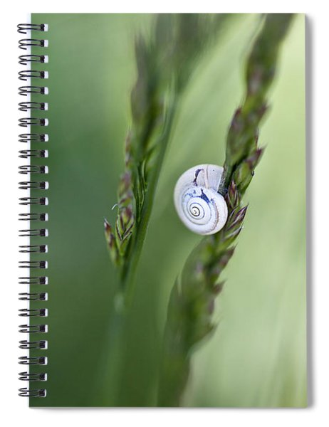 Snail On Grass Spiral Notebook