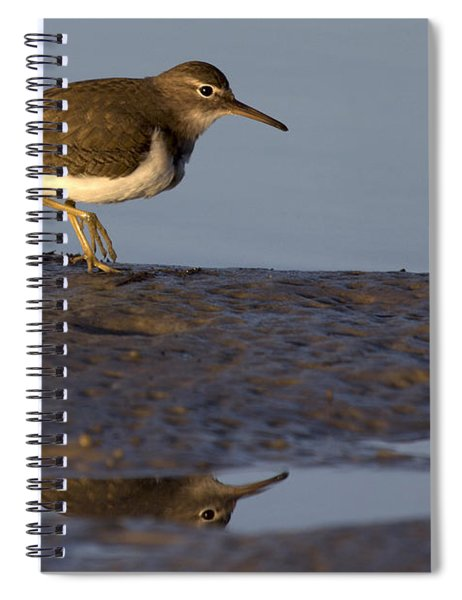 Spotted Sandpiper Reflection Spiral Notebook