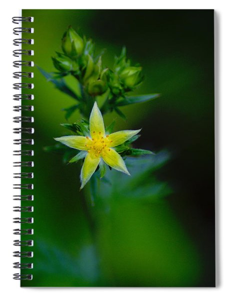 Starflower Spiral Notebook