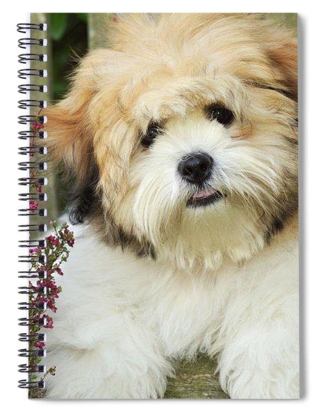 Teddy Bear Dog Spiral Notebook