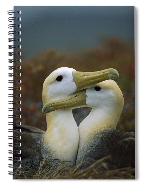 Waved Albatross Pair Bonding Galapagos Spiral Notebook