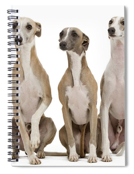 Whippets Spiral Notebook