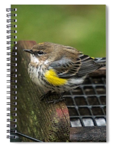 Spiral Notebook featuring the photograph Yellow-rumped-warbler by Robert L Jackson