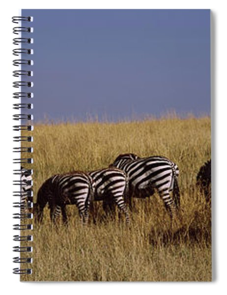 Zebra Migration, Masai Mara National Spiral Notebook