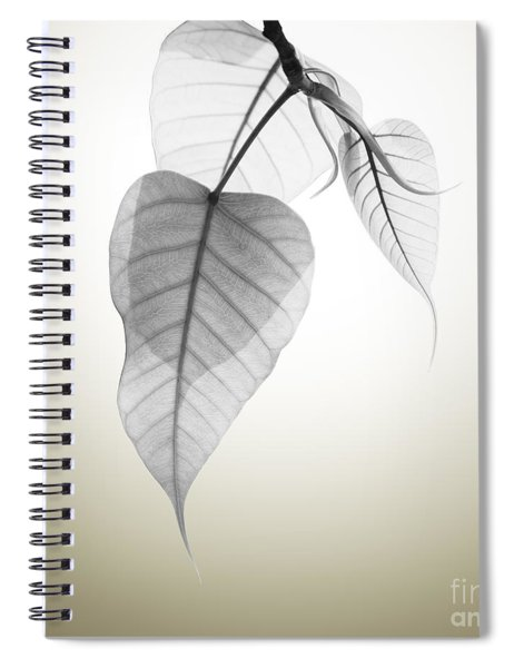 Pho Or Bodhi Spiral Notebook