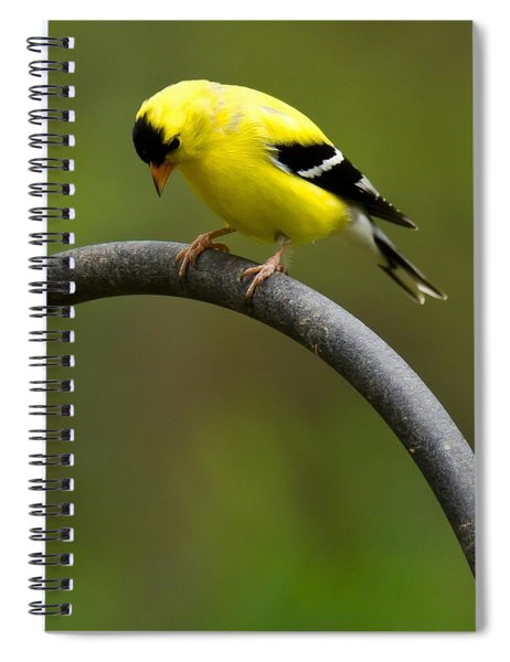 Spiral Notebook featuring the photograph American Goldfinch by Robert L Jackson
