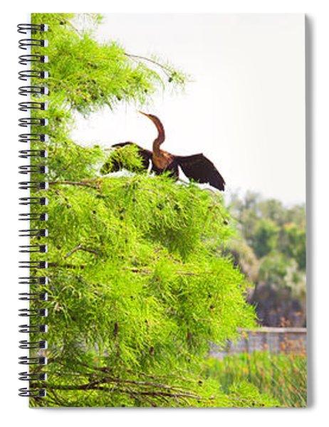 Anhinga Anhinga Anhinga On A Tree Spiral Notebook
