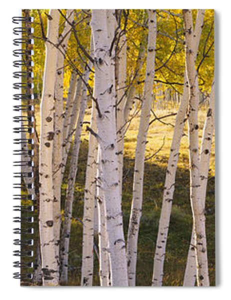 Aspen Trees In A Forest, Telluride, San Spiral Notebook