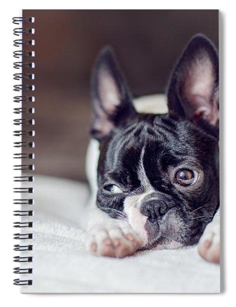 Boston Terrier Puppy Spiral Notebook