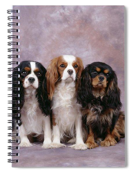 Cavalier King Charles Spaniels Spiral Notebook