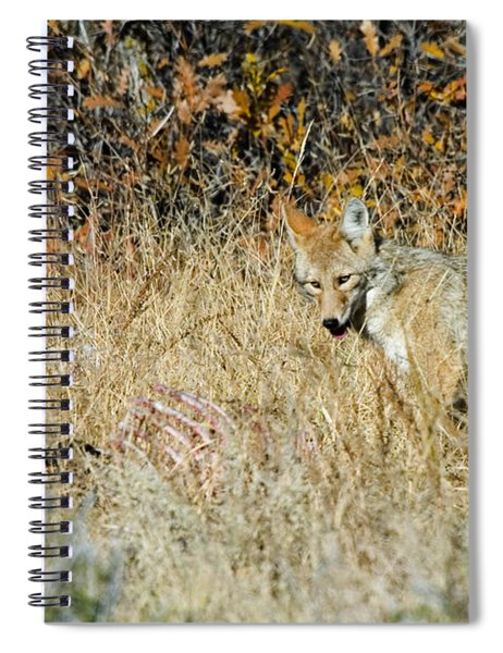 Coyotes Spiral Notebook