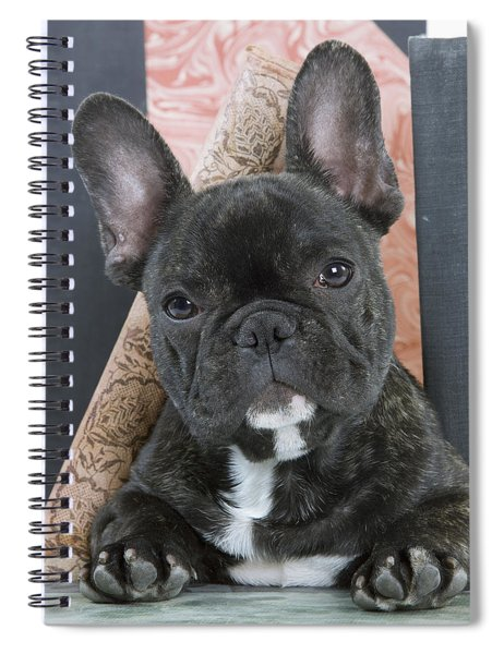 French Bulldog Puppy Spiral Notebook