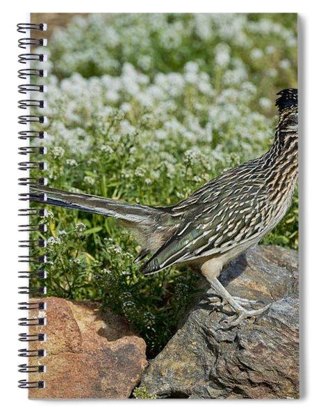Greater Roadrunner Spiral Notebook