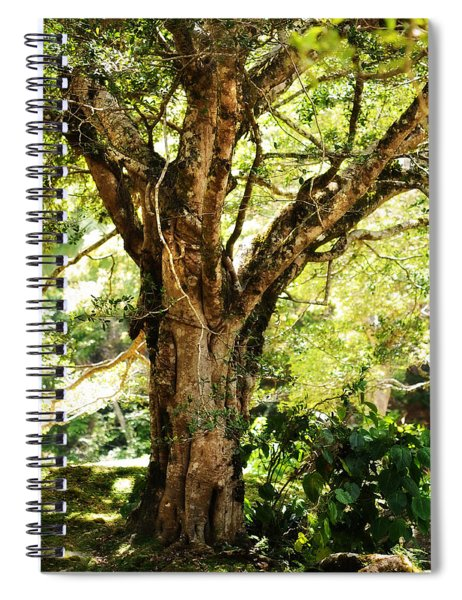 Kingdom Of The Trees. Peradeniya Botanical Garden. Sri Lanka Spiral Notebook