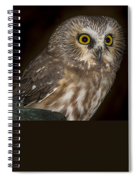 Saw-whet Spiral Notebook