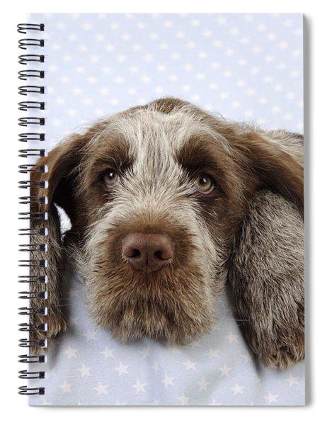 Spinone Puppy Dog Spiral Notebook