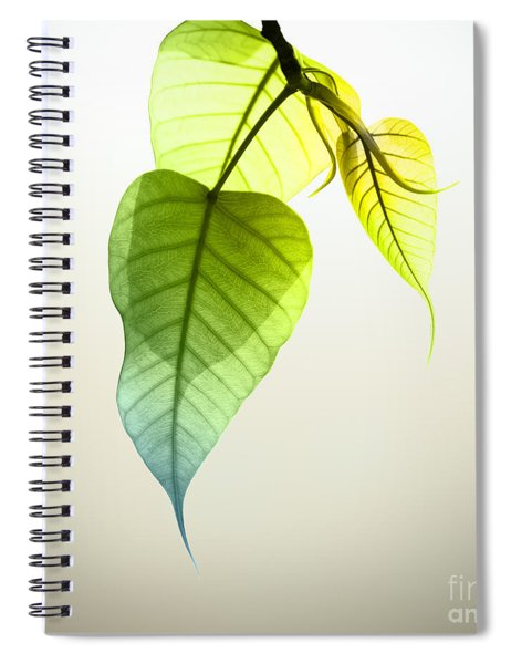 Pho Or Bodhi Spiral Notebook
