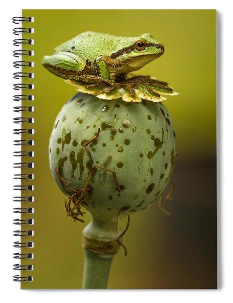 Balancing Act Spiral Notebook